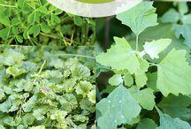 foraging-backyard weeds / by Lisa Mills