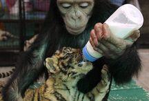 maternal instinct..