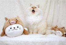 Meow ♡☸