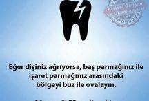 Dişler