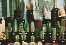 About Cactus