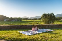 Picnic in Wine Country