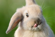 Here Comes Peter Cotton Tail... / by Lindsey Crawford-Reese