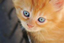 Gatinhos amarelos