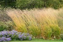 Molinia Combinations / Plant partnerships that include moor grasses