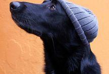 cani con il cappello