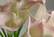 Lily... ur flower