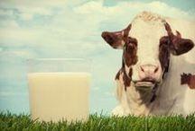 Info Vacche .