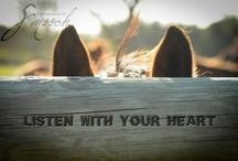 Smart things I wish I'd said... / by Sierra Western Wear