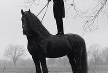 Friesan ♥♥ / Lovak / Horse / Friesan horse :)