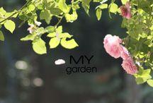 My garden / Kwiaty mojego ogrodu