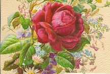 Rose - Beautiful Roses / fiori, sopratutto rose
