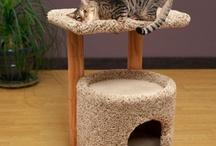 Crafty Cat Ideas