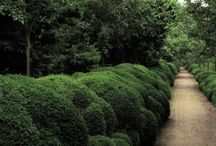 Hedges and cloud trees