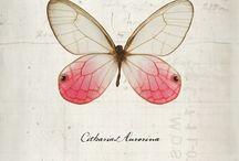 Tatoo farfalle