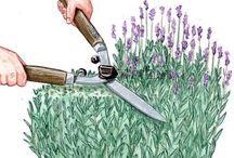 Pflanzepflege