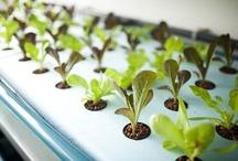 Innovatie Agrofood / Innovaties Agrofood uit binnen- en buitenland