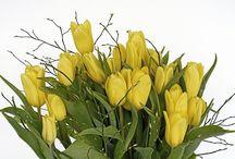 Działka - kwiaty