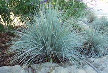 Grasses / by shop bluegrass