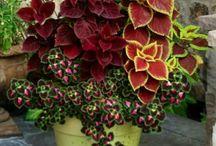 kert,növények
