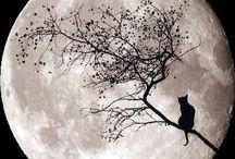 Halloween & Autumn / by Beverly Wolf