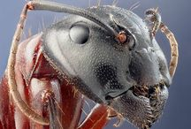 Животные: насекомые и пауки