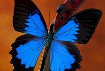Borboletas e libélulas