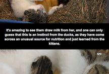 eläimet / eläimiä