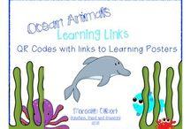 Ocean Animals - School