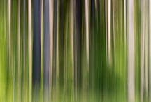 Naturaleza Creativa / Fotografías de #bosques y parajes naturales #creativas #creativepictures #woods
