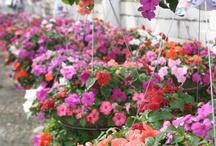 Garden - Container / by Deven D. Underwood