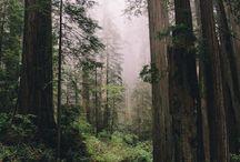 +Landscape - North America