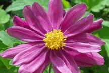 Fall Flowers / These plants will really thrill in the fall months! www.meadowsfarms.com