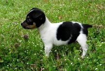 The dog that I want / I have to make one choice between these dogs.. they are all beautiful! It will be difficult...