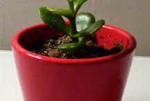 Plantes grasses, succulente et cactus