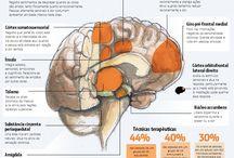 MED cérebro