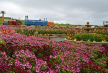 Carlsbad Ranch, California USA / Every spring the hills overlooking the Pacific Ocean come alive with colors of the rainbow as flowers bloom at Carlsbad Ranch, California USA,