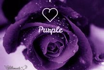 The Ultimate Purple Rose / Purple Roses From www.TheUltimateRose.com