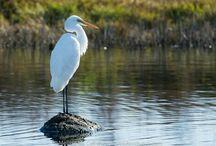 Australian Large Bird Collection
