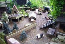 enclos animaux