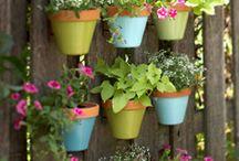 Gardening Ideas / by Becky Palmer