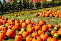 Autumn  / by Pamela McGrath-Solomon