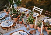 Cactus lover
