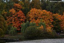 My work:Autumn / Autumn
