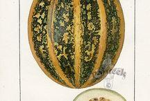Pumpkin / by Kim Snider