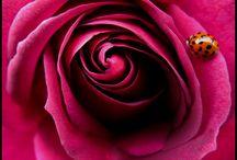 color me rose / by Juliana Kerrest
