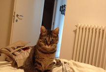 Cat's life / My cat Luce