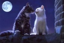 KITTY / true love