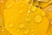 Yellow inspiration on the go. / Explore an open world of optimism and cheerfulness.