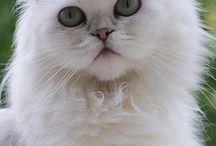 Cats-Γάτες